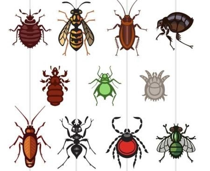 las-plagas-mas-peligrosas-para-los-humanos