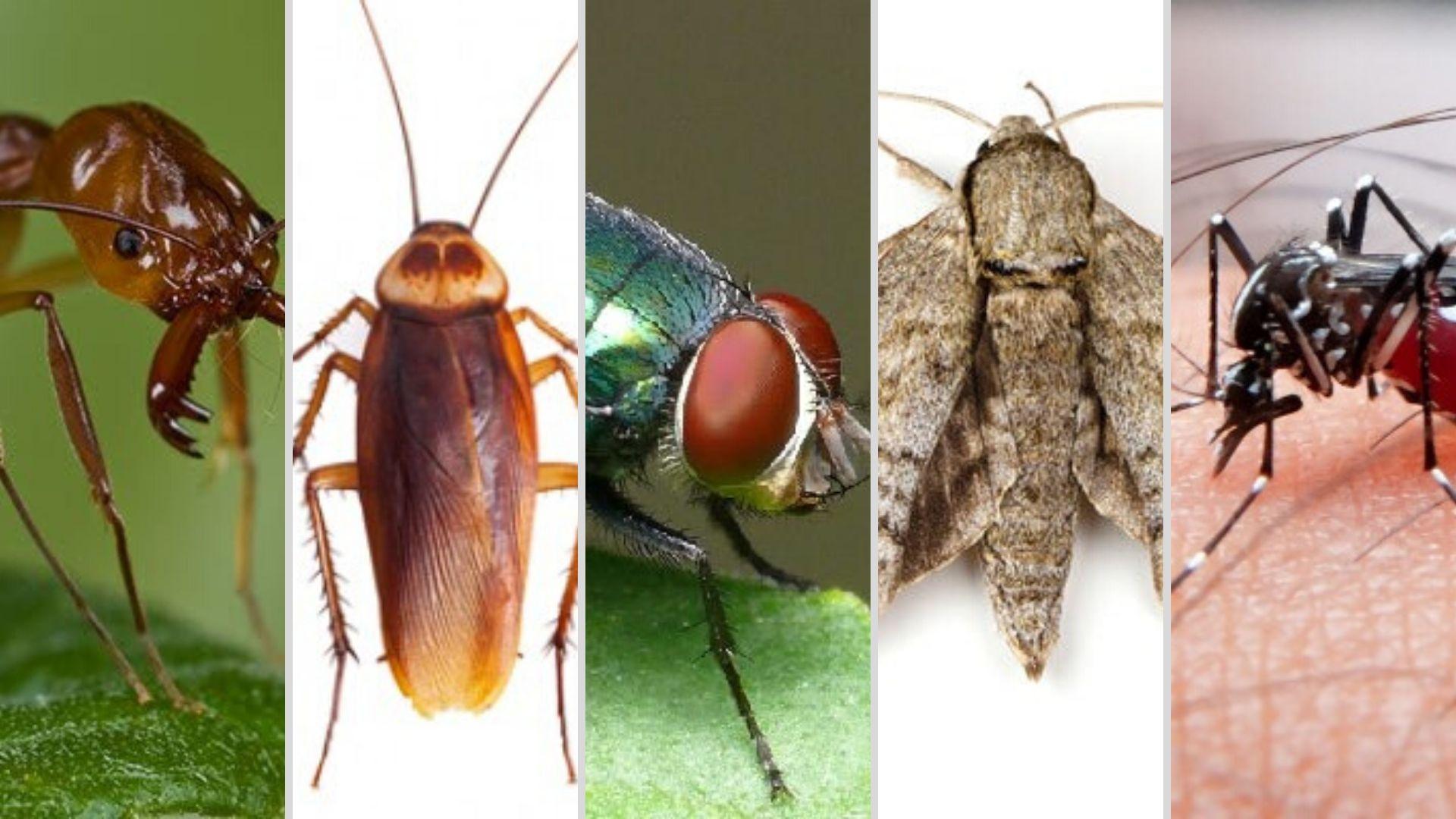 insectos-verano