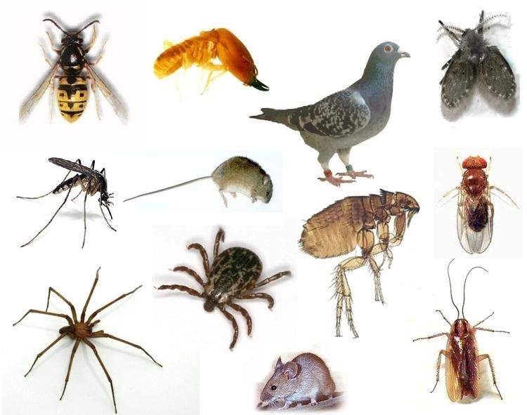 plagas-mas-comunes-en-otono