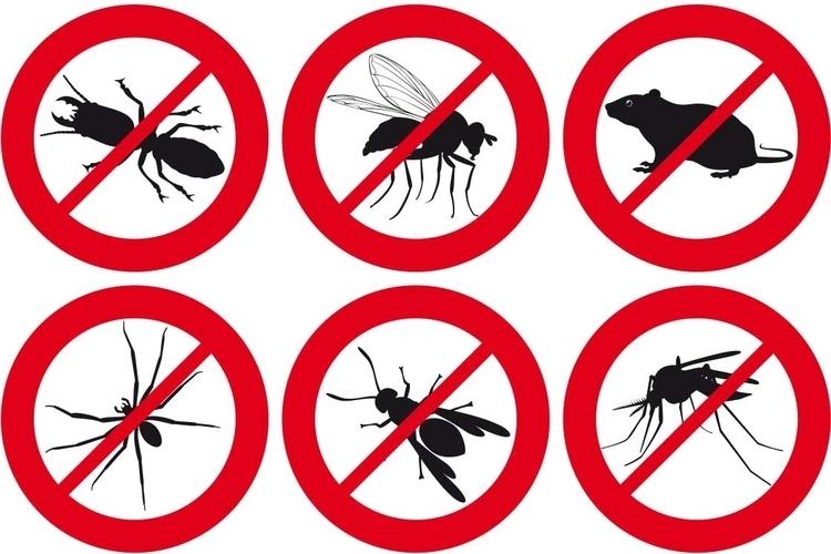 consejos-para-combatir-las-plagas