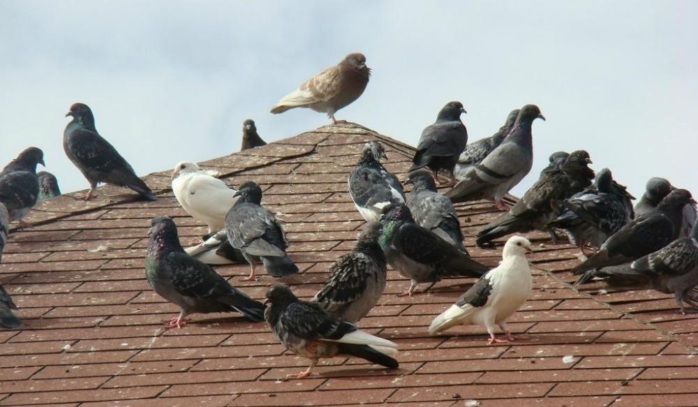 control-de-aves