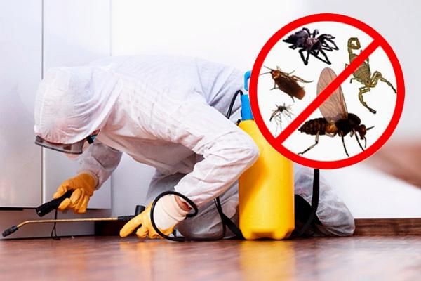 control-de-plagas-servicio-de-fumigacion