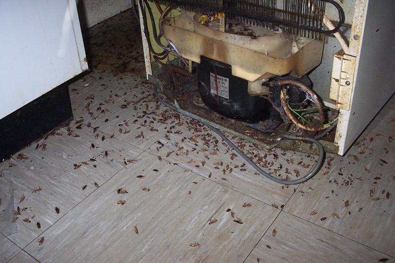 plagas-de-cucarachas-en-bares