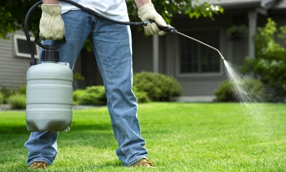empresas-de-saneamiento-fumigacion-del-jardin