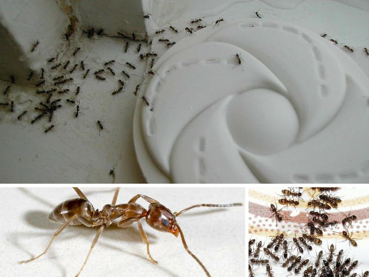 consejos-para-el-control-de-las-plagas-de-hormigas