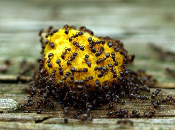 control-de-plagas-de-hormigas-en-verano