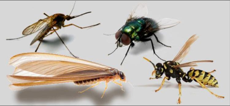 5-peores-plagas-que-pueden-invadir-tus-ambientes