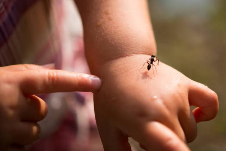 que-hacer-ante-una-picadura-de-hormiga