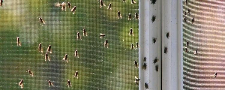 como-eliminar-la-plaga-de-moscas-en-hoteles