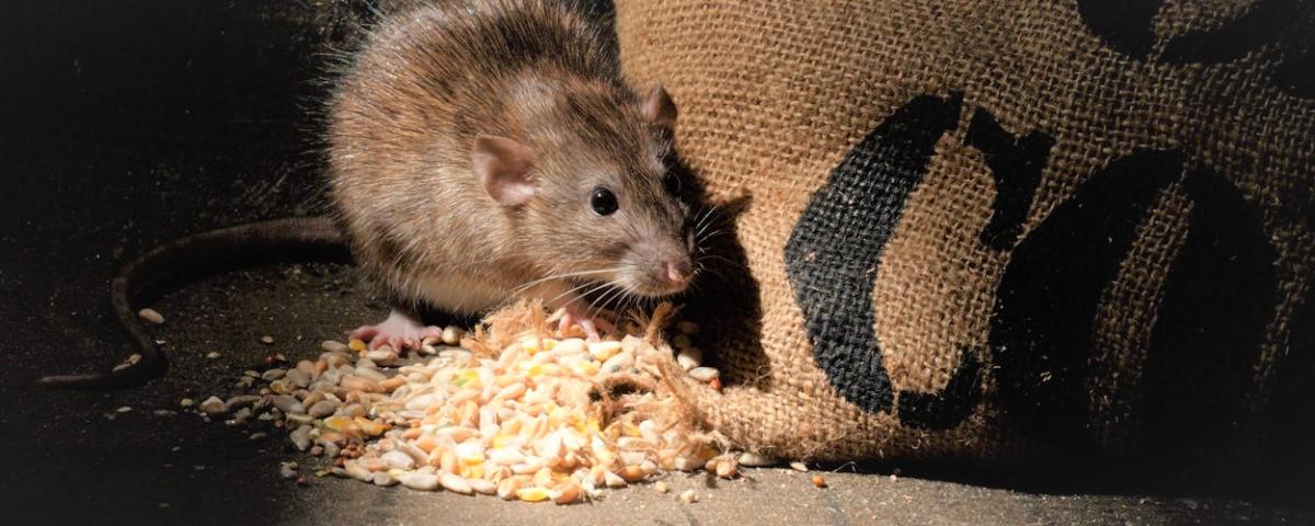 metodos-preventivos-insectos-roedores