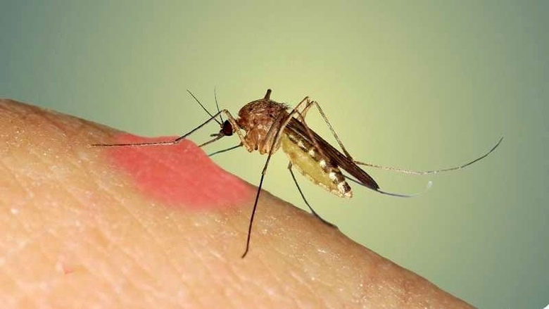 como-evitar-picadura-de-mosquitos-en-verano