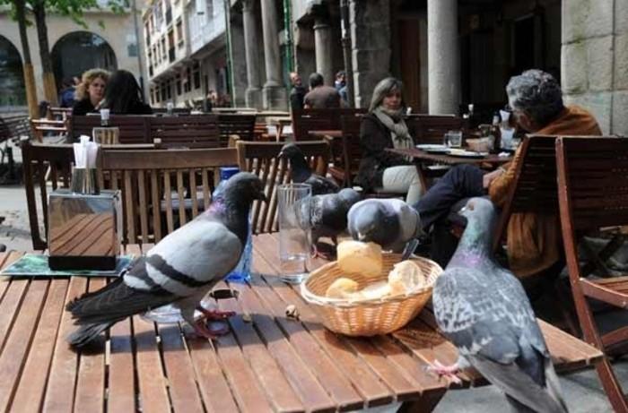 palomas-en-restaurantes