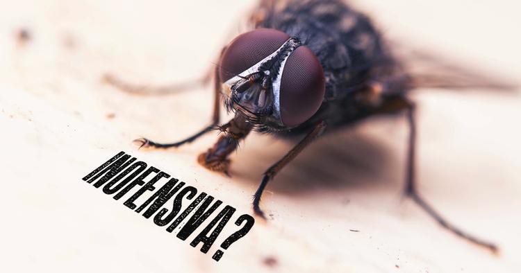 peores-consecuencias-de-las-plagas-de-moscas-en-tu-negocio