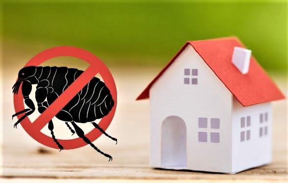 control de plagas de pulgas