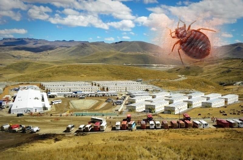 fumigación de plagas en campamentos mineros