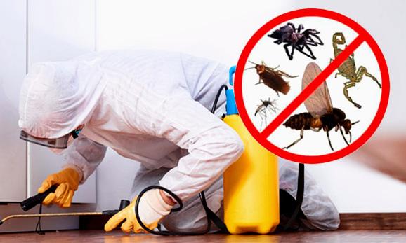 procedimiento-de-control-de-plagas