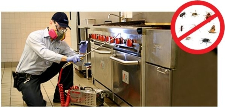 como-prevenir-las-plagas-en-las-cocinas-profesionales