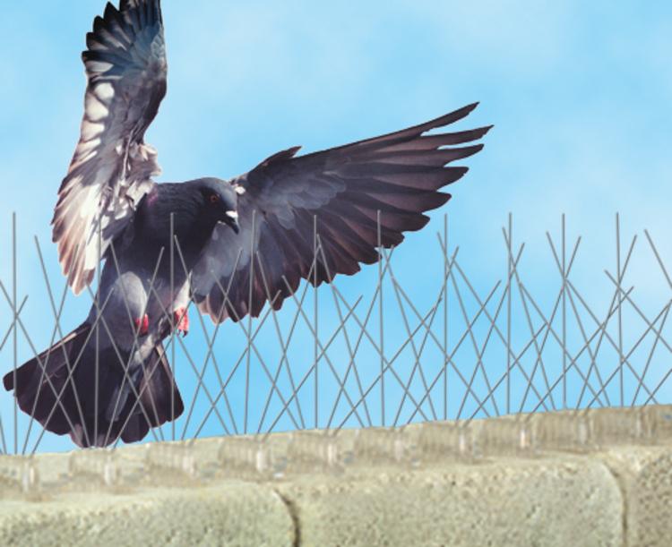 metodos-de-control-de-plaga-de-palomas