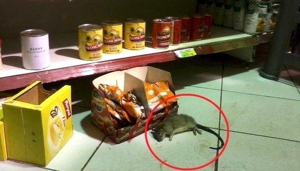 servicio-de-fumigacion-de-plagas-en-supermercados