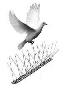 trampa-anti-palomas